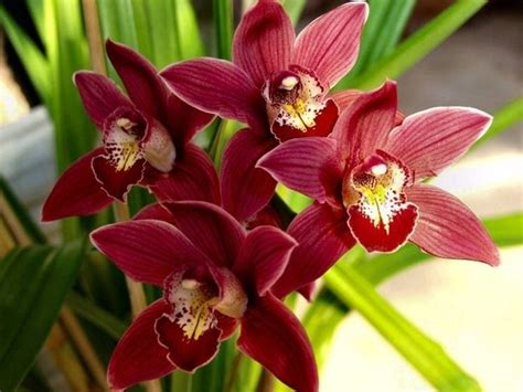 Orchidee Come Curarle In Appartamento by Orchidee Cura Piante Appartamento Orchidee Come Curarle