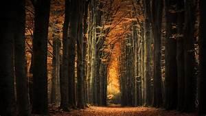 Schöne Herbstbilder Kostenlos : herbst allee foto bild sonne licht natur bilder auf ~ A.2002-acura-tl-radio.info Haus und Dekorationen