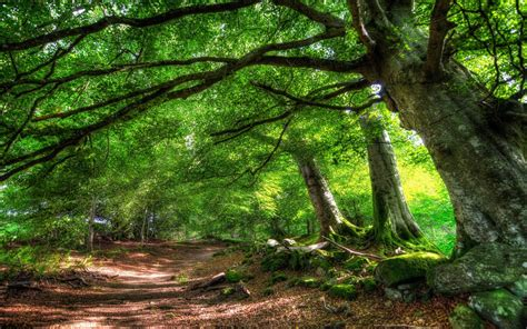 Free Green Forest Background by Free Desktop Wallpapers Trees Wallpaper Cave