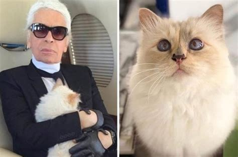karl lagerfeld cat   choupette chanel boss