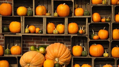 Desktop Fall Backgrounds Pumpkins by Fall Pumpkin Wallpapers 69 Background Pictures