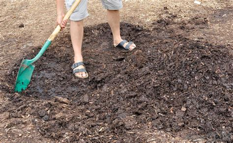 replacing mulch how do i get rid of mulch fungus with pictures