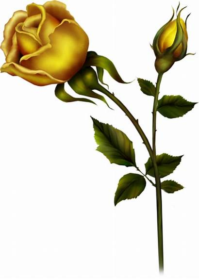 Yellow Rose Bud Clipart Roses Tubes Buds