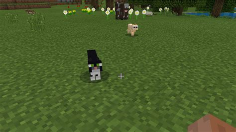 mojang   put  cat  minecraft pcgamesn