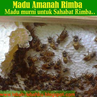 madu asli murni alami lebah dari hutan liar jual madu murni di asli dari sarang ternak