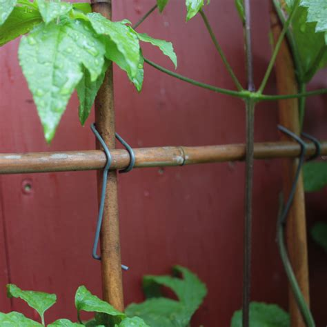 bambusklammern tonkinklammern rankgitter selber bauen