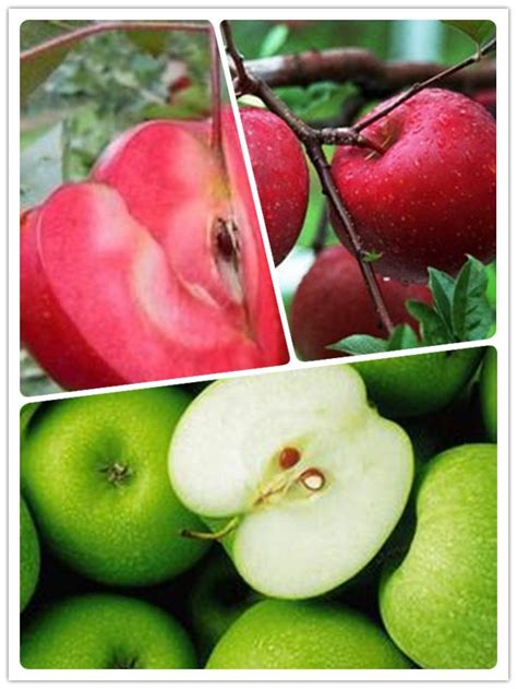 Online Buy Wholesale Fruit Trees Prices From China Fruit