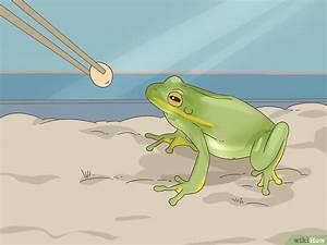 Frosch Als Haustier : den unterschied zwischen einem frosch und einer kr te erkennen wikihow ~ Buech-reservation.com Haus und Dekorationen