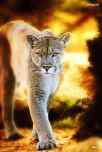 Mountain Lion Animals