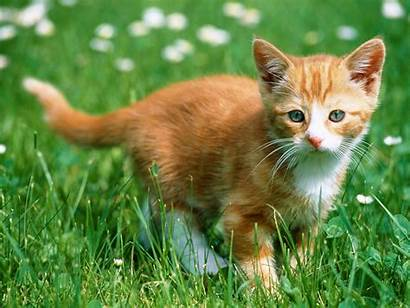 Cats Wallpapers Cat Saskia Mega Posted