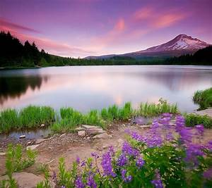 Nature Wallpapers - Page 17
