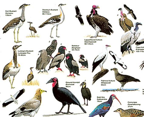 endangered birds list endangered bird species