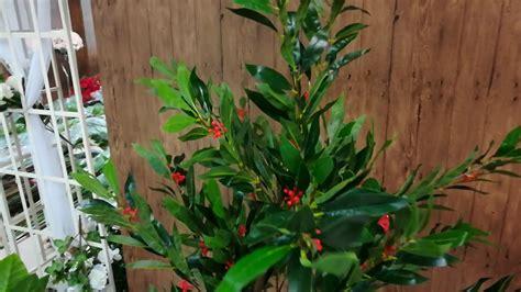 ต้นไม้ปลอม ต้นโอลีฟ มีดอก - YouTube