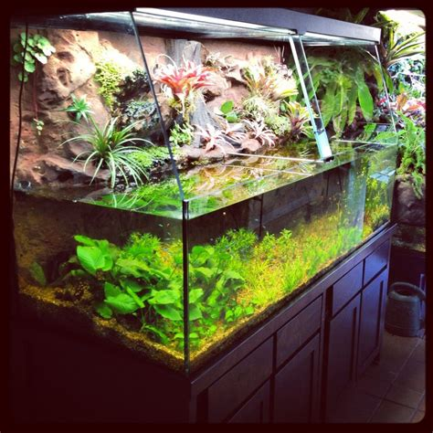 47 best images about aquarium and terrarium stuf on vivarium tortoise enclosure and