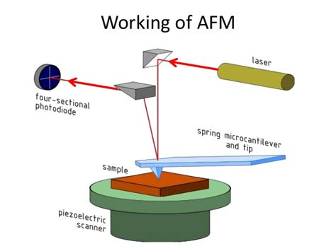 Afm atomic force microscopy