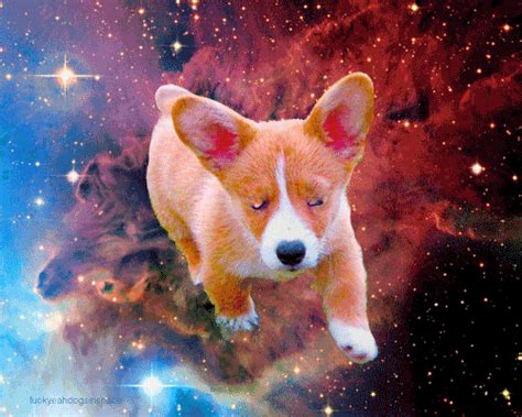 dogs  space gifs find share  giphy