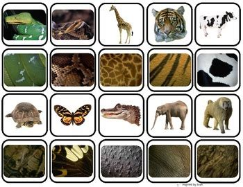 animal body coverings match sort  autism tpt