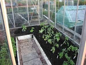как посадить помидору в теплице видео