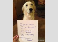 image11 Funny Animals Pinterest Dog, Animal and Doggies