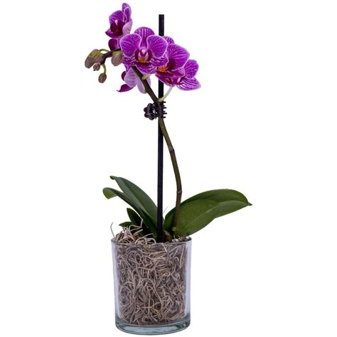 Diy Kitchen Organization Ideas - 2 in orchid phal p02 01 the home depot