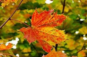 Feuilles D Automne à Imprimer : les plus belles feuilles de l 39 automne feuille du verger ~ Nature-et-papiers.com Idées de Décoration