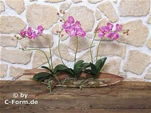 Orchideen Ohne Topf : orchideen luftwurzeln orchideen luftwurzeln abschneiden so machen sie es orchideen und ihre ~ Eleganceandgraceweddings.com Haus und Dekorationen