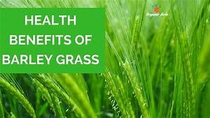 Top Health Benefits Of Barley Grass