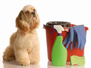 pet safe cleaning products dogtime With dog cleaning house
