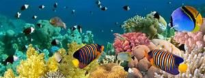 Aquarium Einrichten So Gehts Marktde