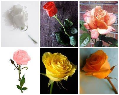 cinta dinda lestari bunga mawar hadiah fahmi km