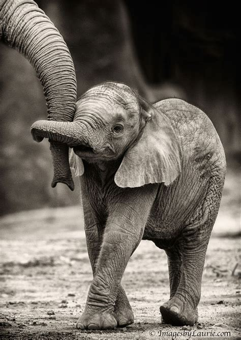 elephant trunk baby elephant holding trunks http bit ly 1z4rt6x the beautiful board pinterest animal