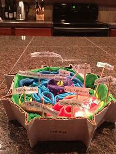 Explanation For The Plant Cell Model