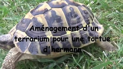 am 233 nagement terrarium pour tortue d hermann