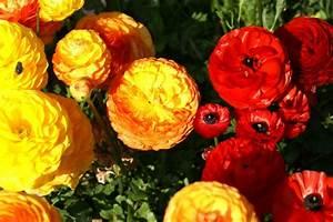 Was Sind Frühlingsblumen : bunte fr hlingsblumen bereichern visuell ihr heimdekor ~ Whattoseeinmadrid.com Haus und Dekorationen
