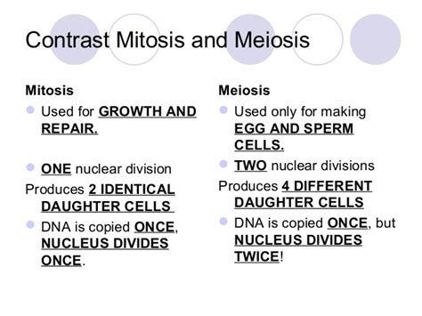 background notes mitosis  meiosis