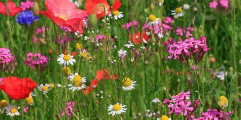 printemps si e social quelle fleur sauvage êtes vous le test