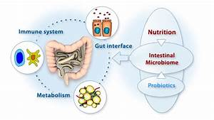 Is Your Gut Bacteria Making You Fat?