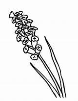Lavender Coloring Pages Vacuum Flower Drawing Simple Cleaner Luigi Island Colouring Printable Canary Designlooter Drawings 776px 84kb Getcolorings Getdrawings sketch template