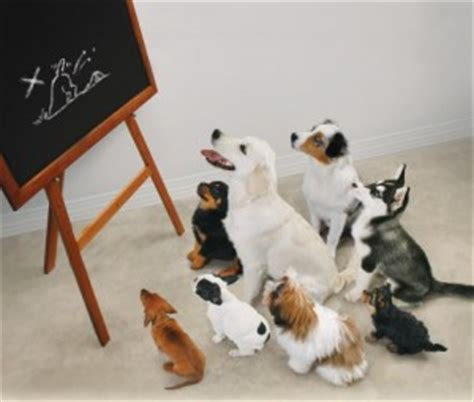 kindergarten  college  lesson  dog training