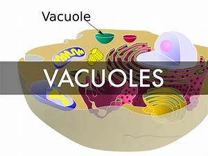 Vacuoles And Cytoplasm By Alex Brooking