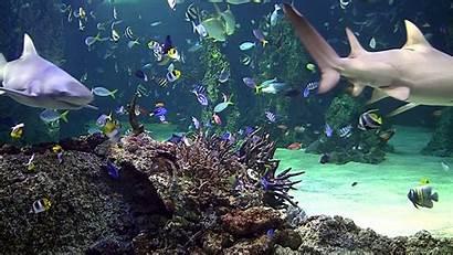 Aquarium Windows Screensaver Scenes Coral Reef Tv