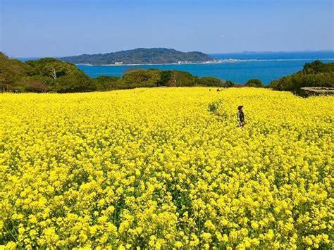 Nokonoshima Island (Fukuoka) - 2020 All You Need to Know ...