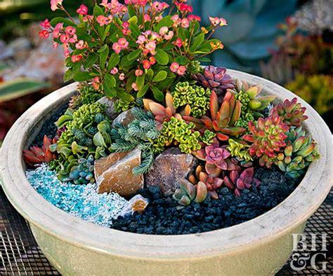 succulent gardens in pots mini succulent container garden