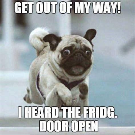 Funny Pug Memes - 18 best pug memes of all time