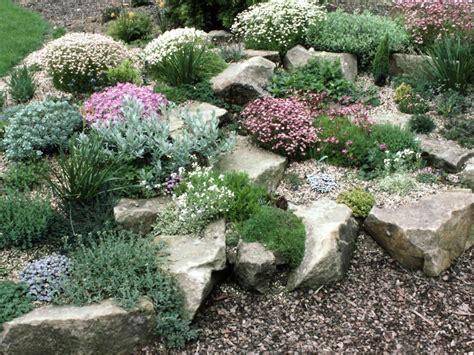 planting a rock garden plants for rock gardens hgtv