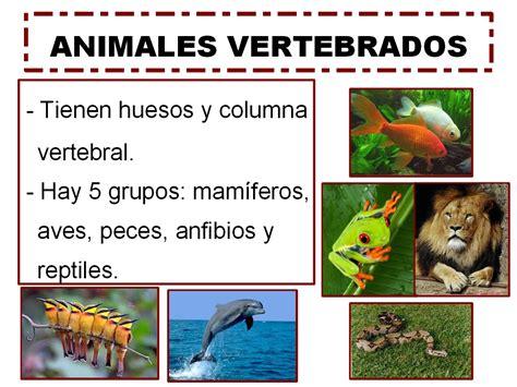 segundo en el molinico animales vertebrados  animales