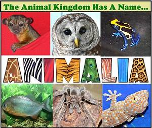 Opinions on Animalia (disambiguation)