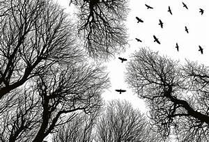 Kunst Schwarz Weiß : fototapete v gel im wald als schwarz wei kunst vlies fototapeten wiizi fototapeten ~ A.2002-acura-tl-radio.info Haus und Dekorationen