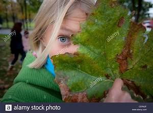 Schleimpilze Im Garten : decompose stockfotos decompose bilder alamy ~ Lizthompson.info Haus und Dekorationen