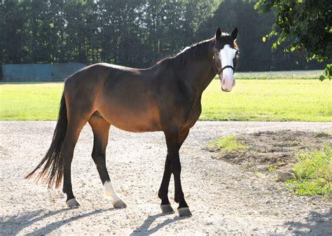 süße pferde bilder pferde ponys freizeitreitstall schammelsdorf